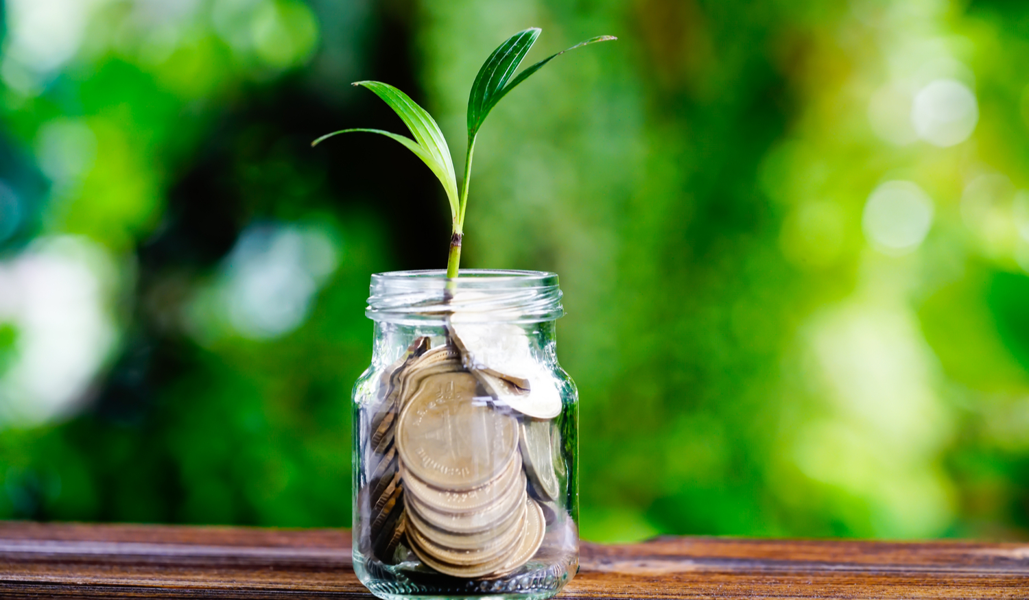 Plant growing in a jar of coins