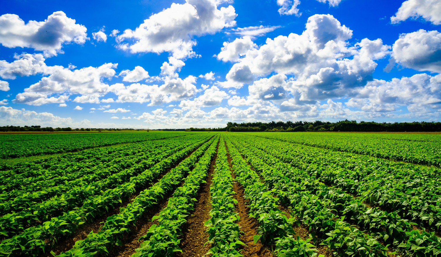 Agricultural field under sunny sky