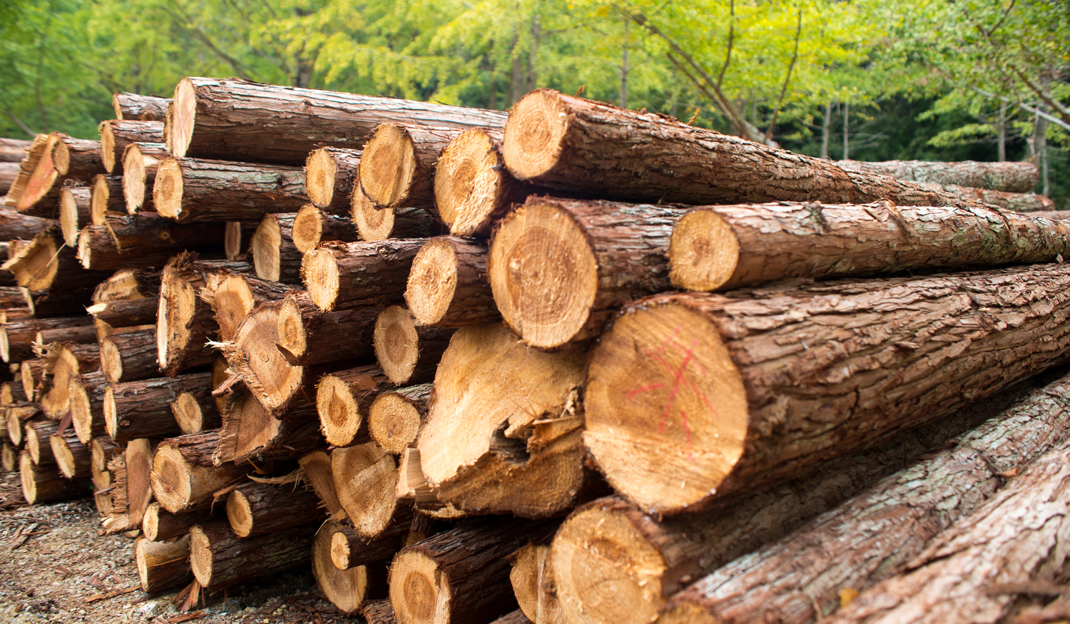 LAND JOURNAL-Blog-Awareness-How To Successfully Invest In Florida's Timber Industry-2019-875-1