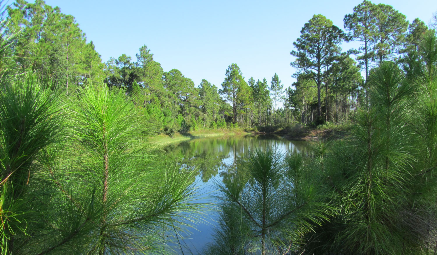 Photo of Florida conservation land