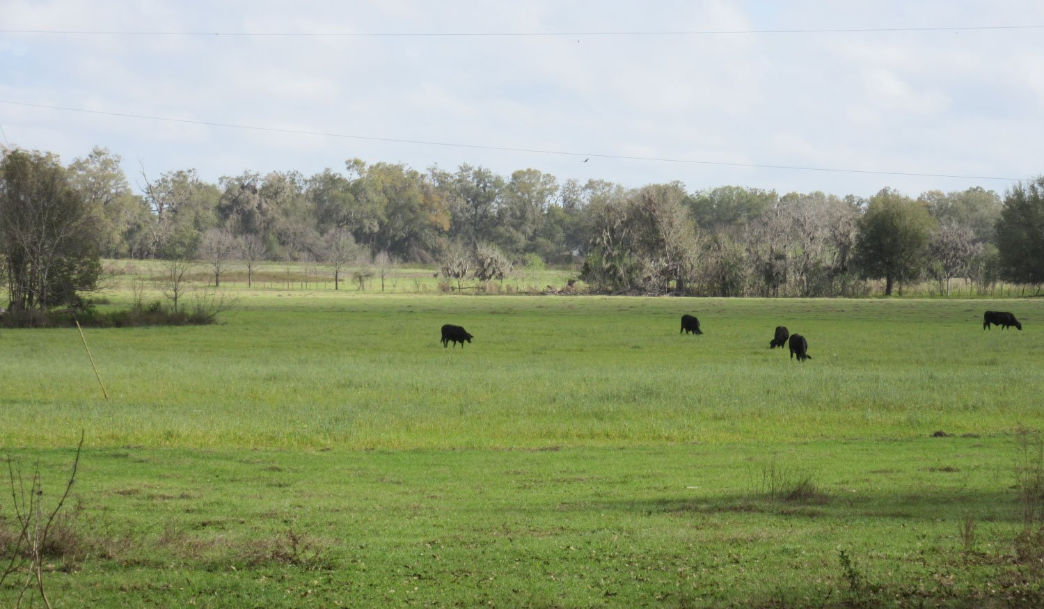 Photo of a Florida ranch conservation easement