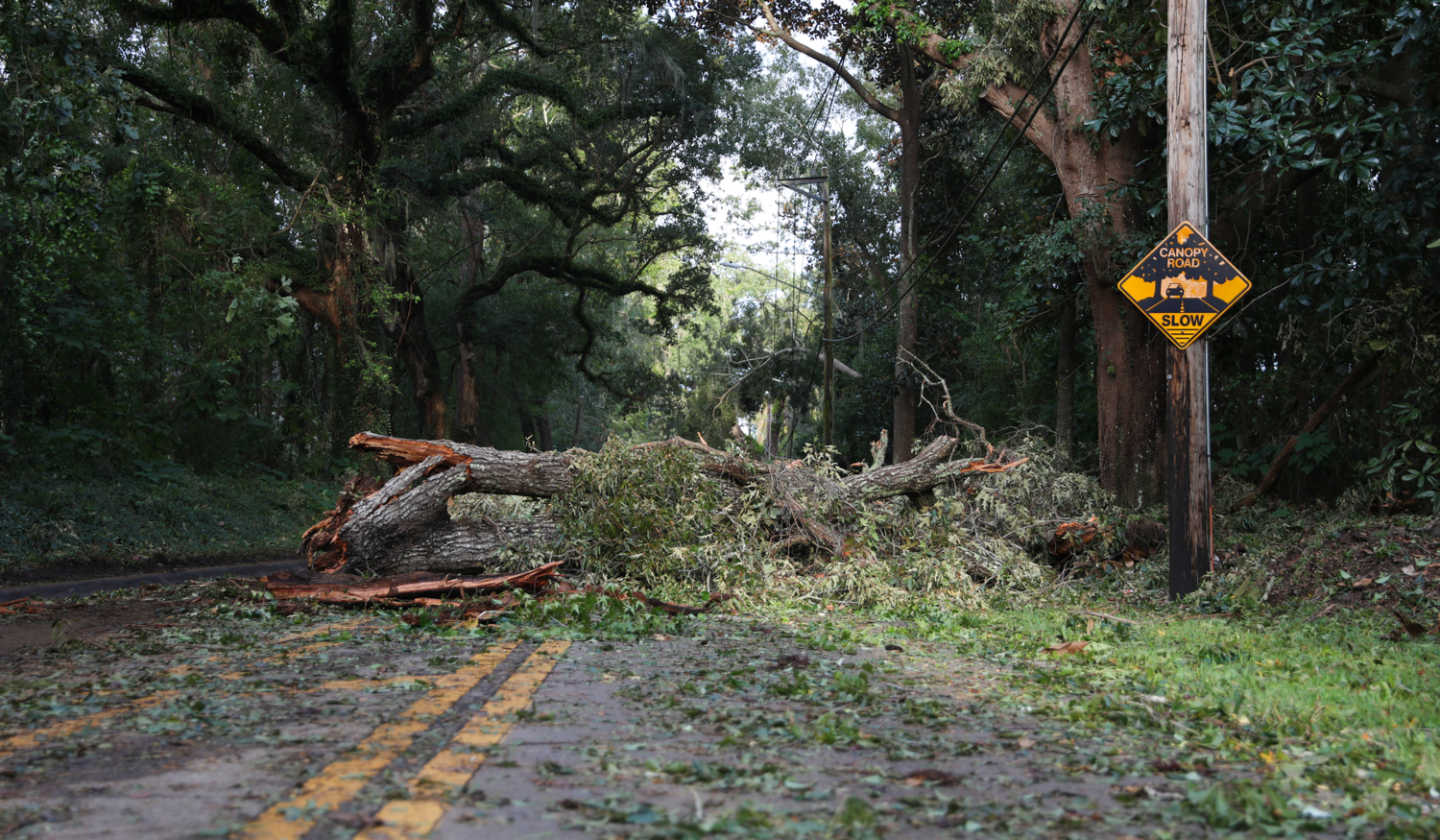 Tree fallen on road after a Florida hurricane