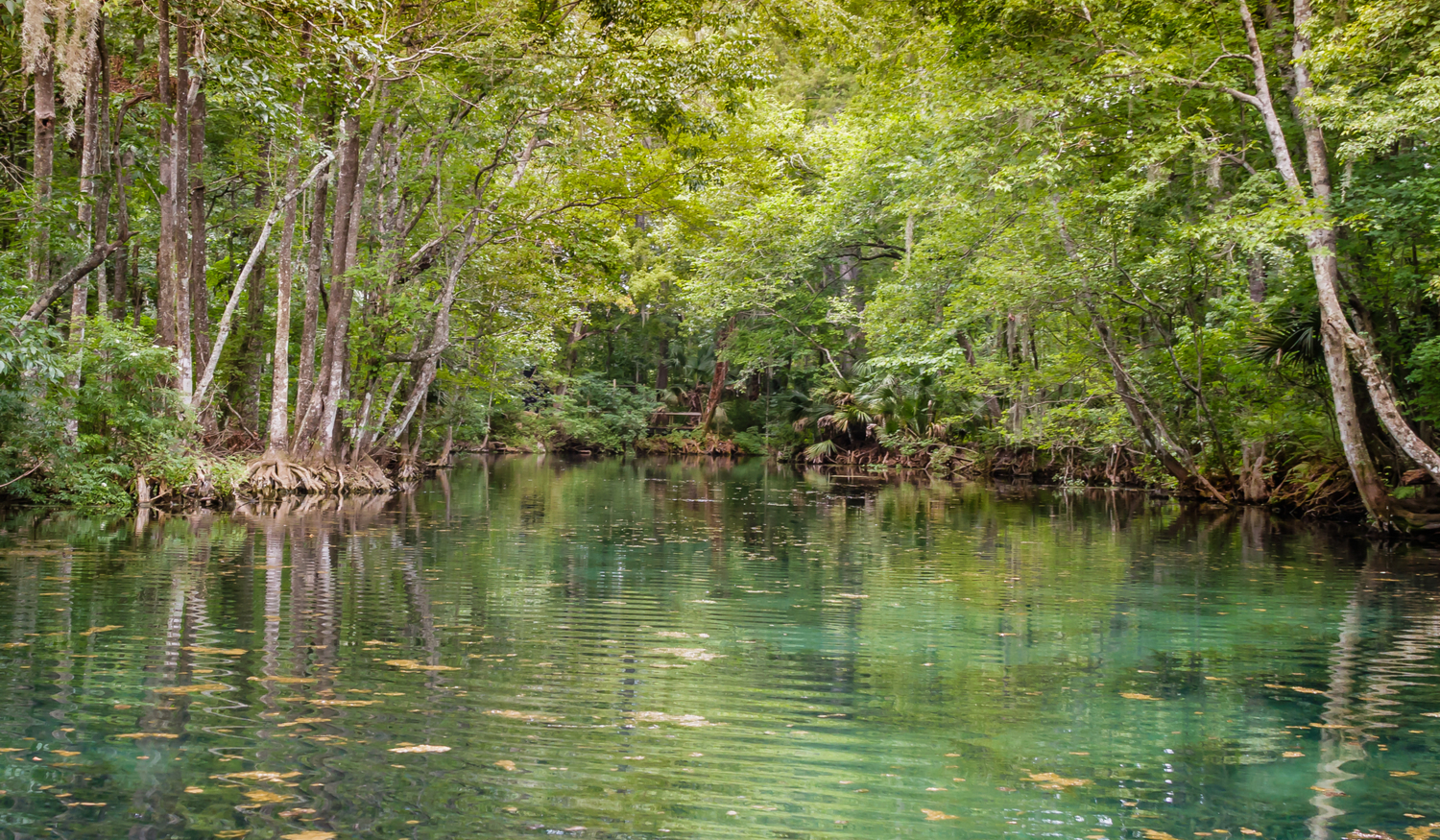 Photo of a beautiful Florida river and riverbank in a natural setting