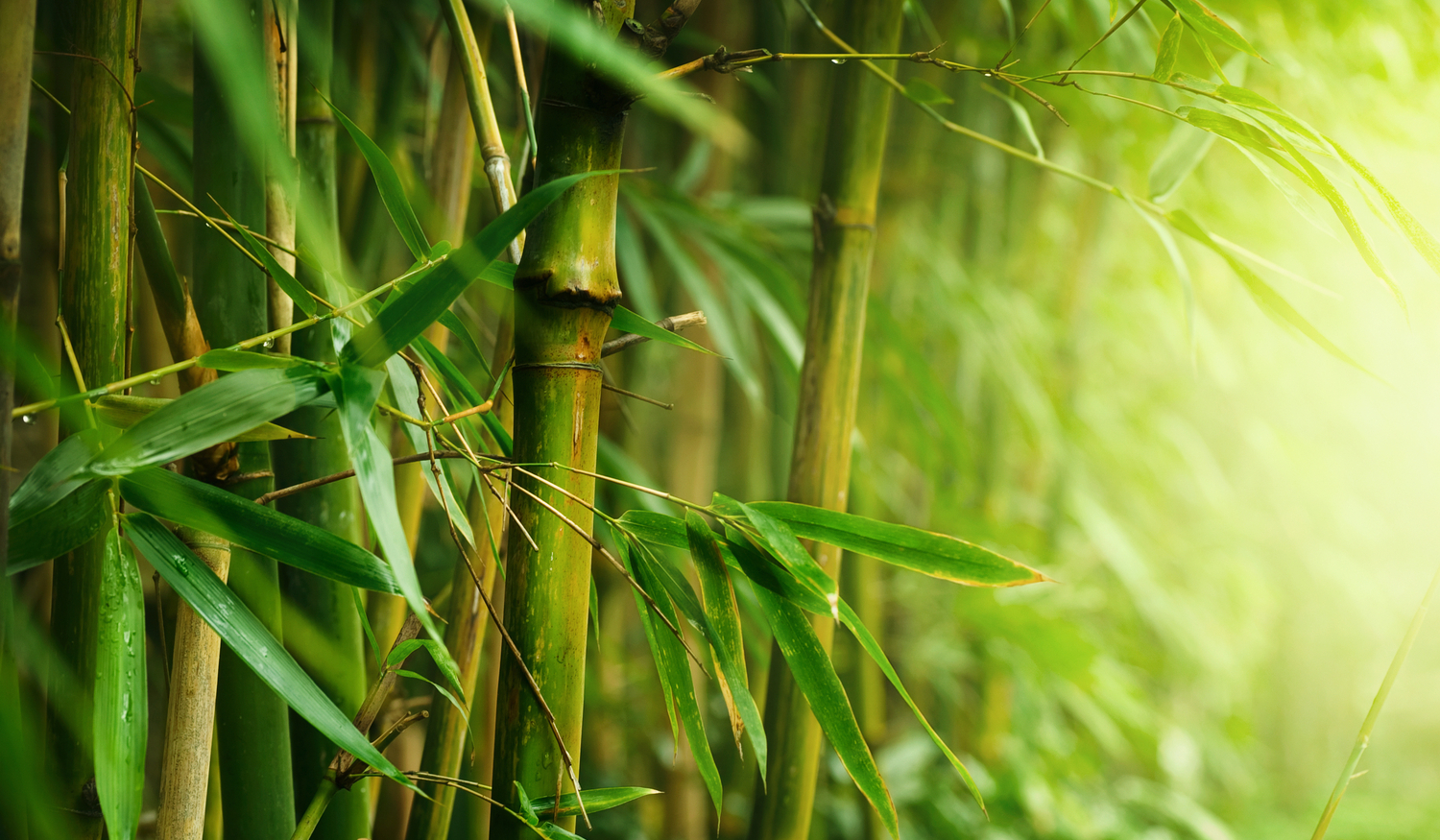 LAND JOURNAL-Blog-Awareness-7 Facts about Bamboo, an Alternative Crop for Floridians-2019-875