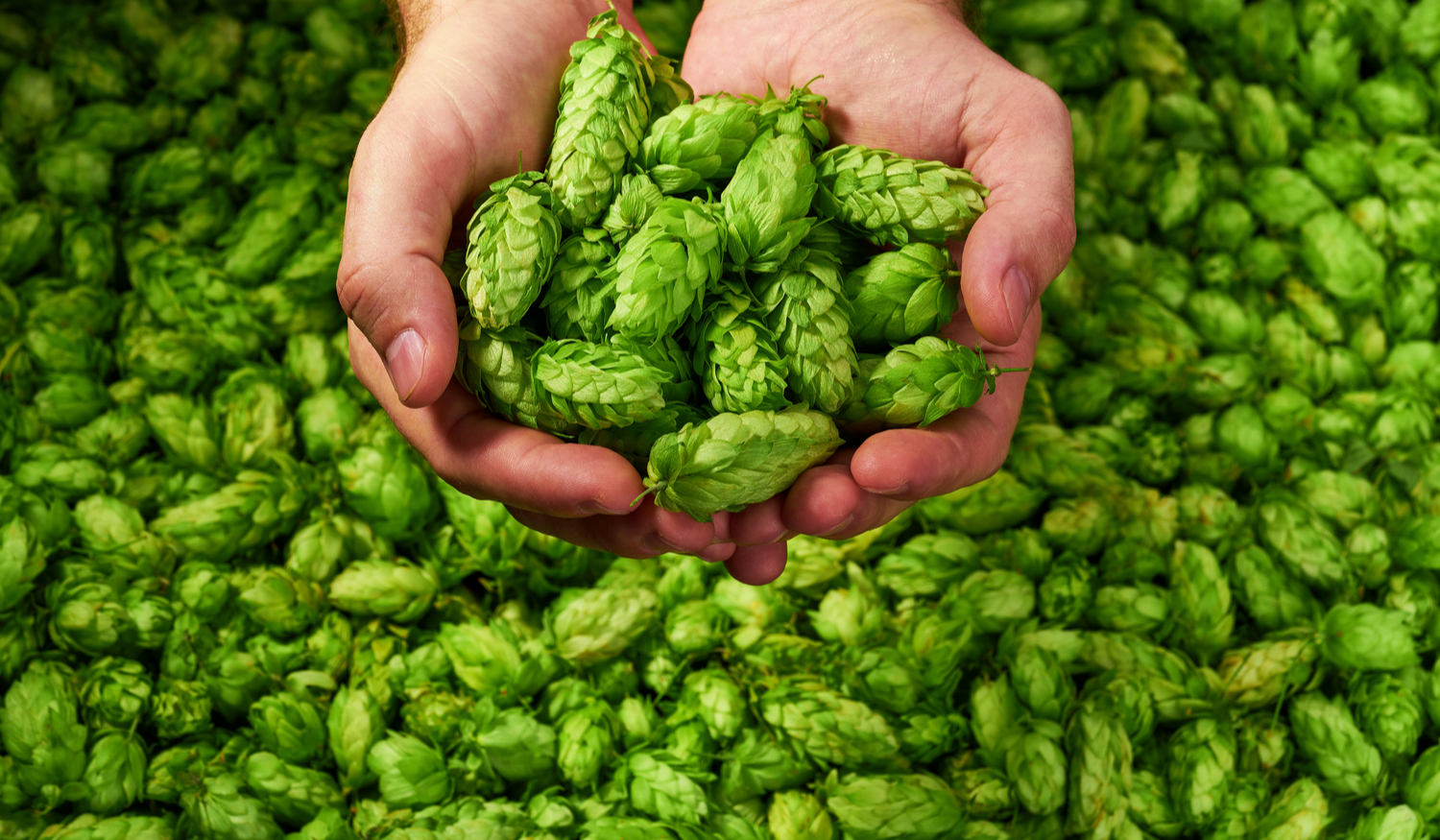LAND JOURNAL-Blog-Awareness-Beer Hops Brewing A New Alternative Crop for Florida's Farmers -2019-875