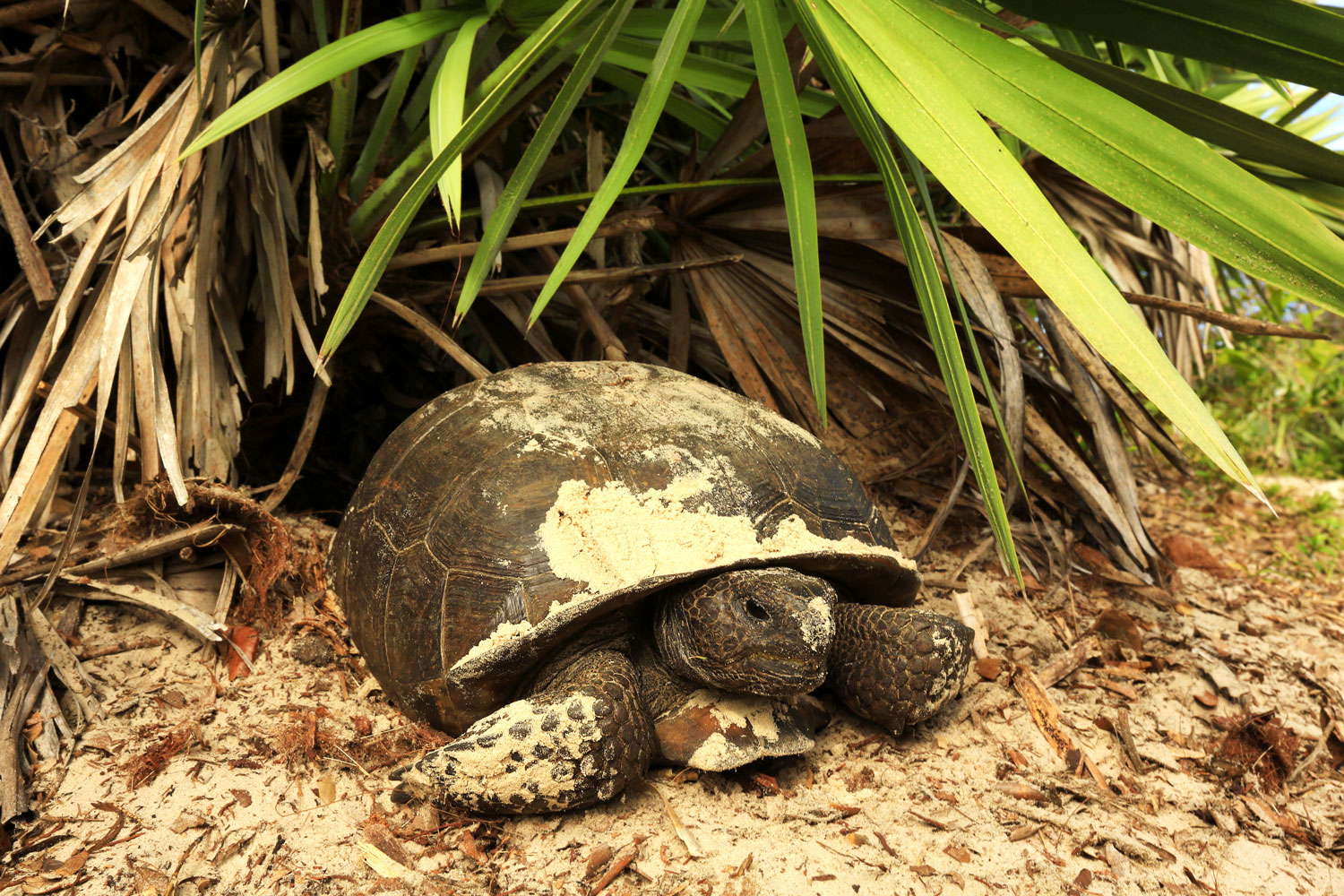 """LAND-JOURNAL-Blog-Awareness-""""How-to-Deal-With-Gopher-Tortoises-on-Your-Property""""-2019"""