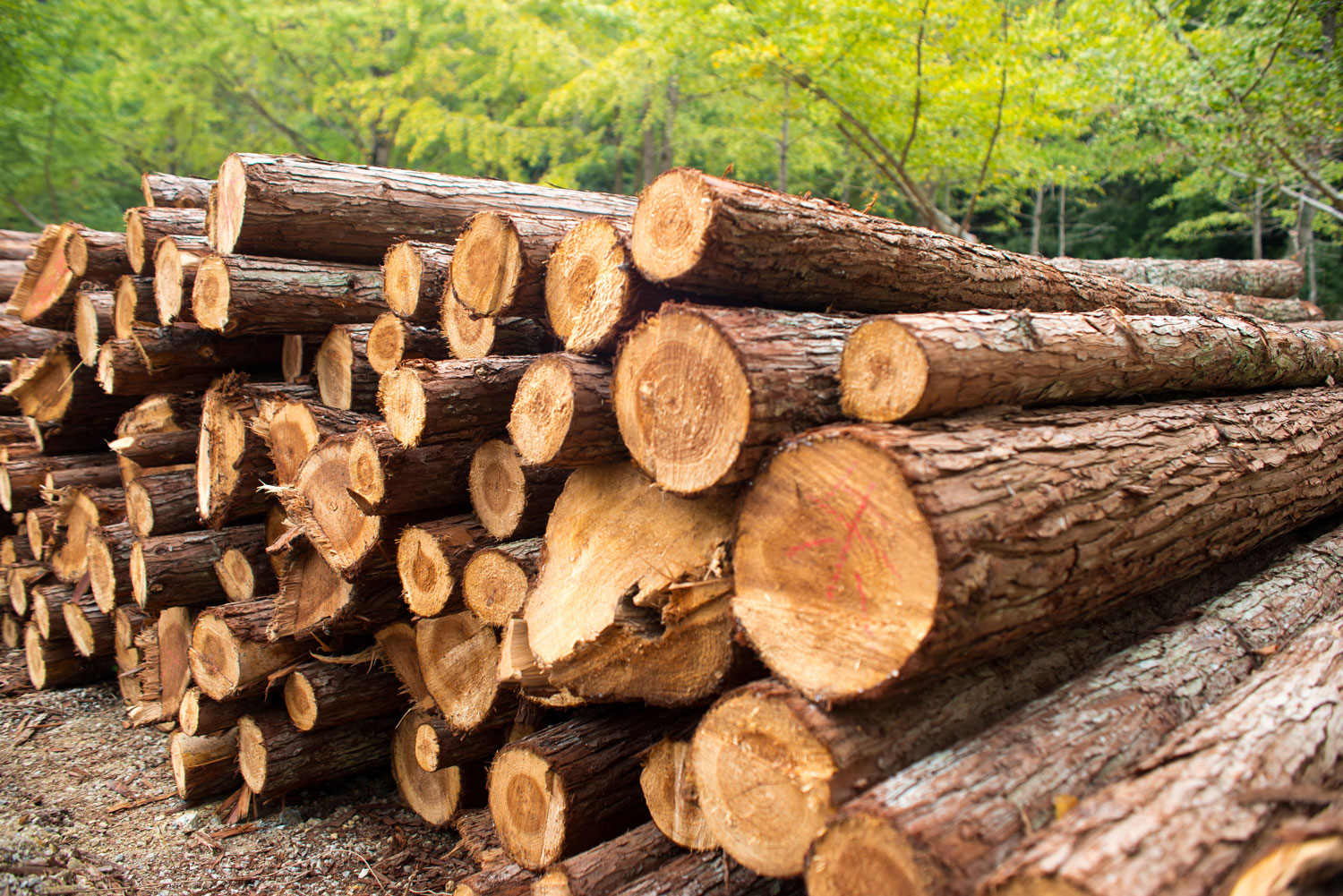 LAND-JOURNAL-Blog-Awareness-How-To-Successfully-Invest-In-Florida's-Timber-Industry-2019