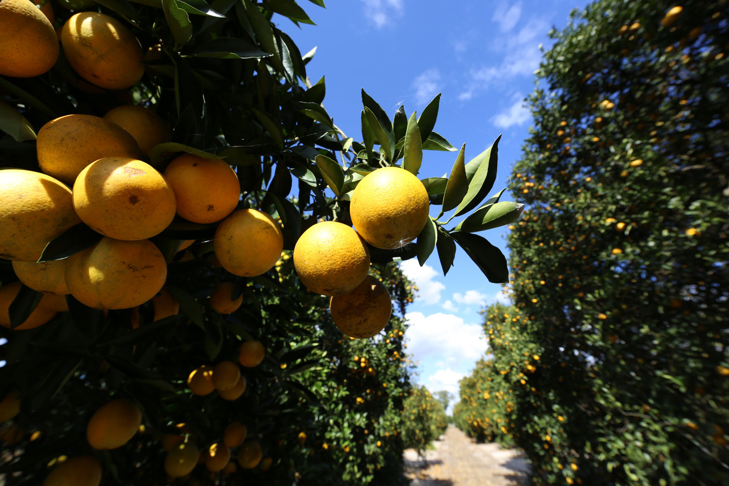 LAND-JOURNAL-Blog-Awareness-Nothing-Says-Florida-Like-Citrus-2019