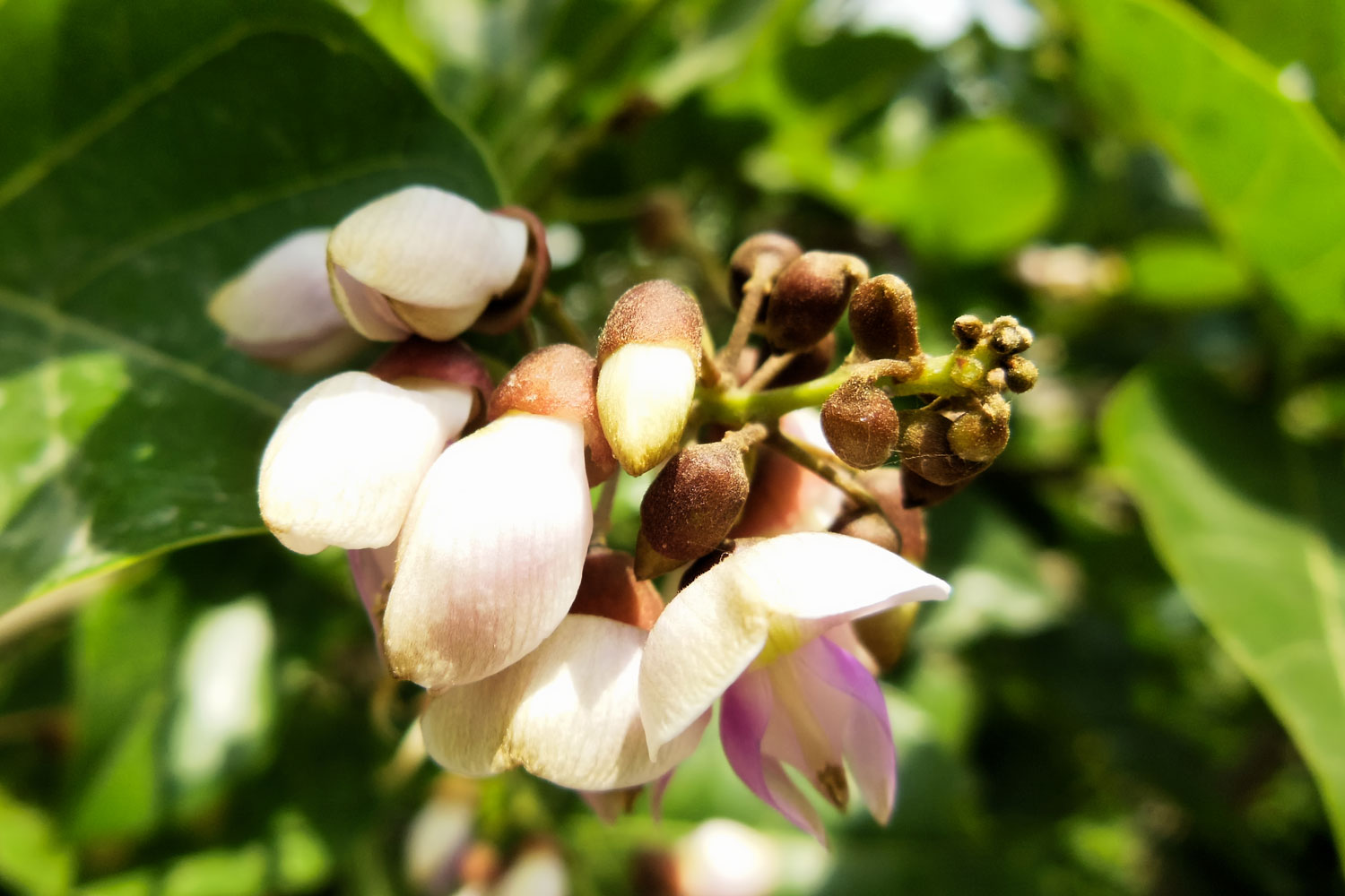 LAND-JOURNAL-Blog-Awareness-Pongamia-An-Environmentally-Friendly-Alternative-To-Soy-Beans-2019