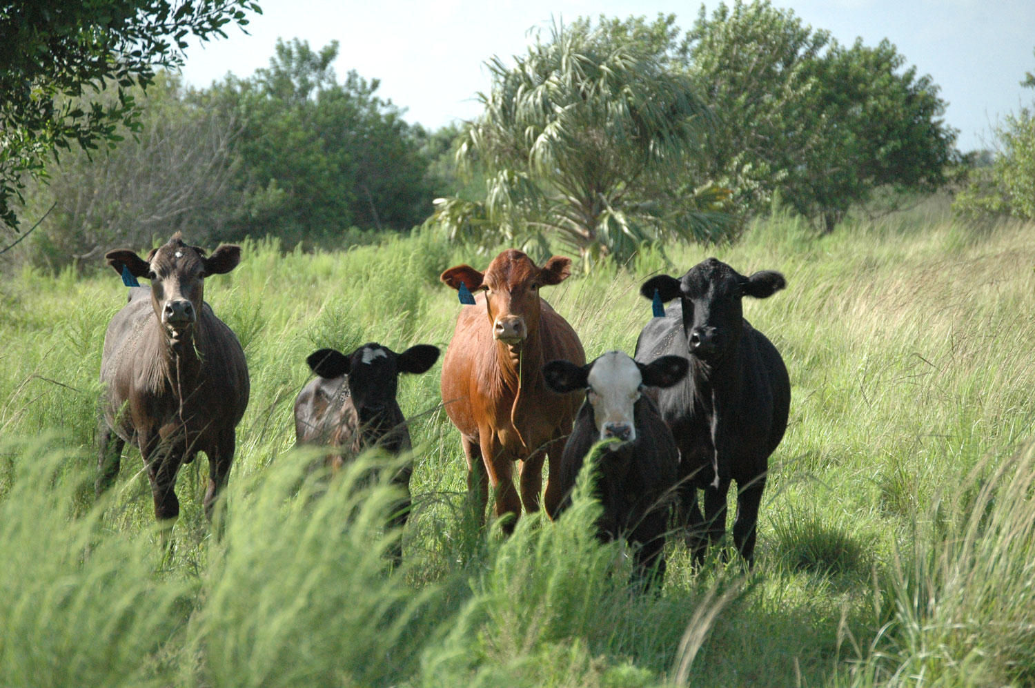 LAND-JOURNAL-Blog-Awareness-The-Cow-Calf-State-2019